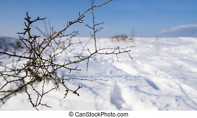 Branches of the tree with a white snow on a background in winter.