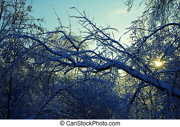 Branches of the trees in the ice against the evening sky
