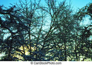 trees in the ice against the evening sky