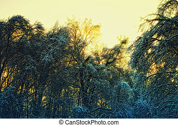 trees in the ice against the sky