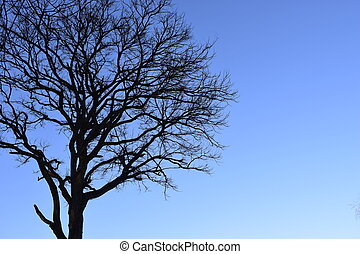 Branches of tree against clear blue sky.