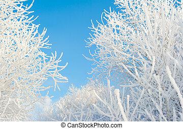 Branches of tree in snow