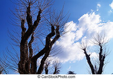 Branches of tree in winter