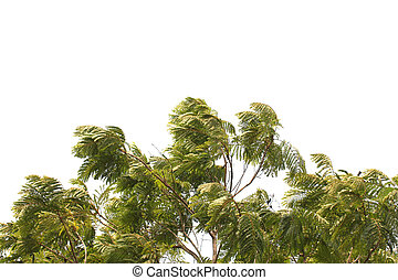 Branches of tree on white background.