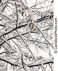 branches of tree under snow in winter