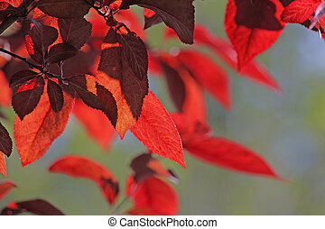 branches of tree with red leaves
