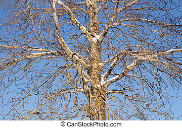 Branches of tree with snow on a blue sky background at winter