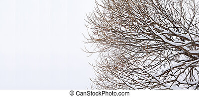 Branches of tree with snow on a sky background at winter