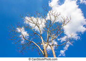 Branches of Tree Without Leaves with Blue Sky Background