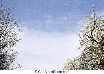 Branches of trees against the blue sky. Beautiful green park on the sky background.