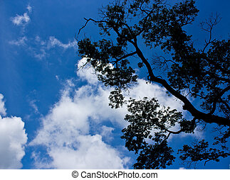 branches of trees against the blue sky with white clouds