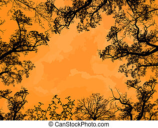 Branches of trees against the orange sky