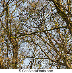 Branches of trees against the sky