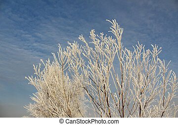Branches of trees in hoarfrost
