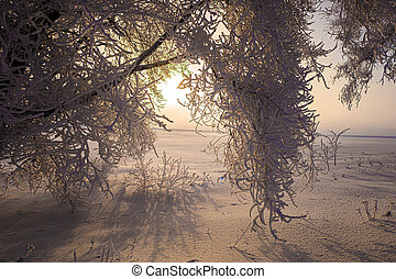 Branches of trees in hoarfrost on a background of white snow