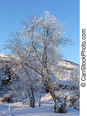 Branches of trees in snow against the blue sky