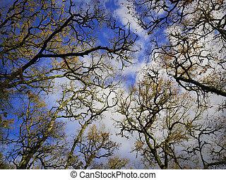 Branches of trees in the sky