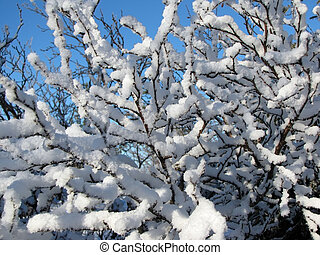 Branches of trees in the snow