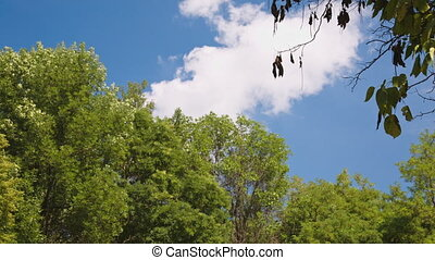 Branches of trees on blue sky background