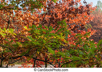 Branches of various oaks with autumn leaves different colors