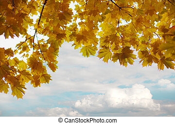 Branches of yellow autumn leaves