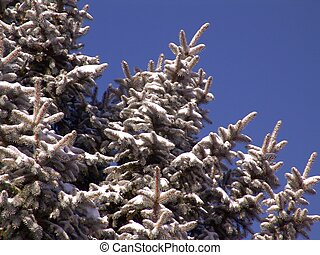 branches, pinetree