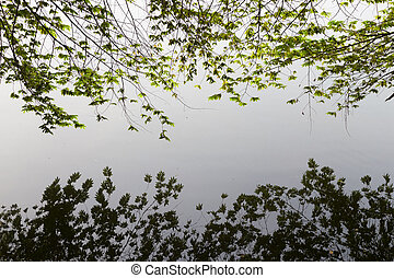 branches reflected in the water