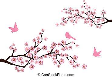 branches, sacura