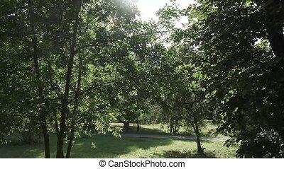 branches, soleil, dos
