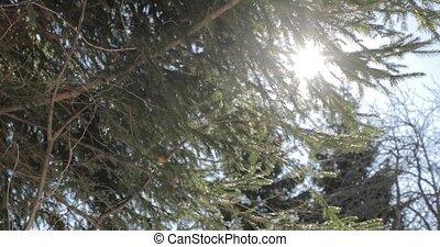 branches, soleil hiver, clair, derrière, impeccable