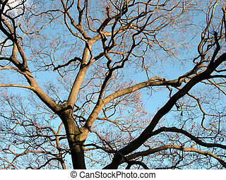 Branches - A tree without leaves and flowers and the sky-an...