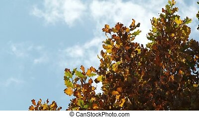 Branches - The wind blows and shakes the leaves.