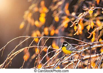 branches., tit, træ, efterår, birk, fugl