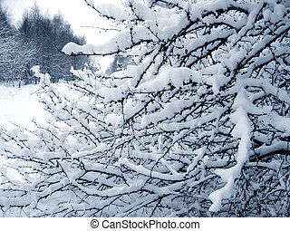 Branches under a snow