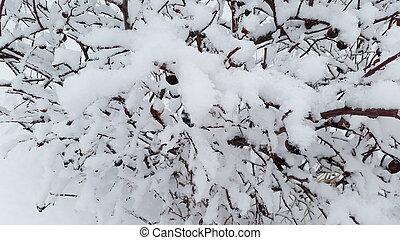 branches under snow in winter