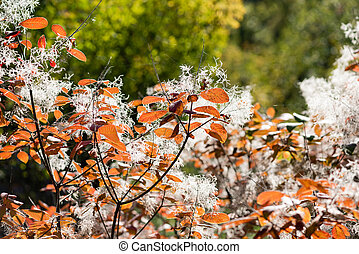 Branches with autumn leaves and fluff close up