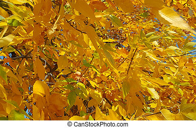 Branches with autumn leaves