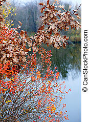 Branches with autumn leaves on the background of river