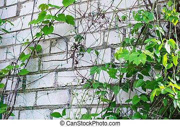 Branches with green leaves on a brick wall