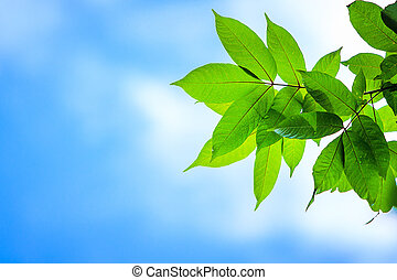Branches with green leaves. On a white background. and sky