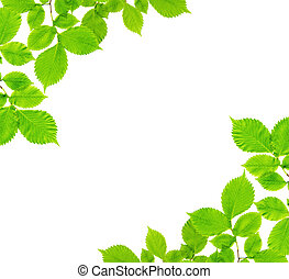 Branches with green leaves on a white