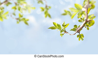 branches with green leaves on blue sky background