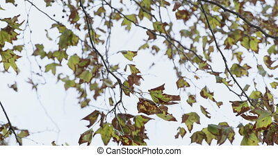 Branches with green leaves swaying in wind 4k - Close-up of...