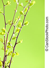 Branches with green spring leaves