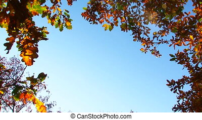 Branches With Leaves In Autumn Colours On Blue Sky Background