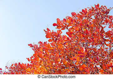 Branches with leaves on a background of blue sky, minimalism