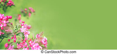 Branches with pink flowers on blurred green background banner