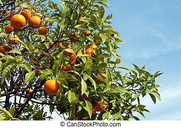 Branches with the fruits