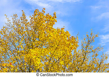 Branches with Yellow Leaves Against Sky