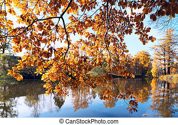 Branches with yellow oak leaves hang over the water on a bright Sunny day.